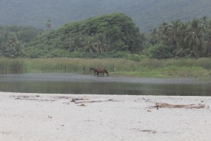 Birds filling the trees, fearless horses drinking at crocodile infested lagoon