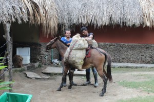 Big asses are common in Colombia. This one brings goods into the Park