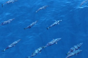 A school of tuna swam with us for over six hours.