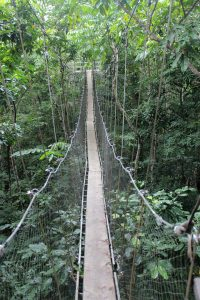 Samoan engineering at its best. The rainforest canopy walk.